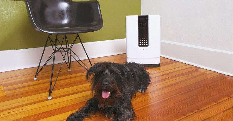 meilleur purificateur d'air pour poil animaux chien chat comparatif guide achat et avis