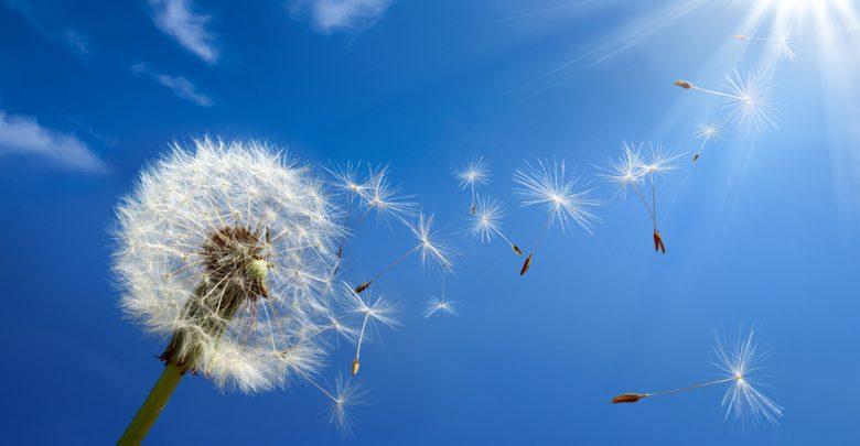 Les purificateurs dair sont-ils requis pour capturer le pollen de l'air